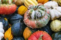 Kürbis Sorten Bischofsmütze, Patison, Sweet Dumpling, Accorn und Halloween