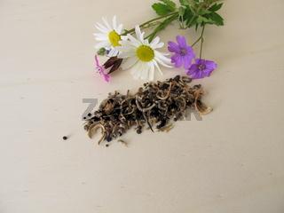 Bienenfreundliche Samenmischung und Wildblumen für Wildbienen, Bienen und andere Insekten