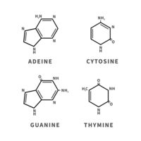 Set of chemical structures of Adeine, Cytosine, Guanine and Thymine, four main nucleobases, simple icons