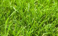 Beautiful fresh green grass background closeup