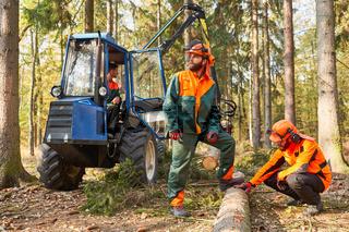 Holzfäller beim Baum fällen mit Forwarder