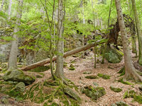 wood with fallen tree near waterfall Riesloch, wooded rock massif, Bodenmais, national park Bavarian Forest