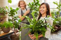 Floristen Team bei der Lieferung von Grünpflanzen