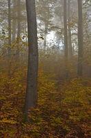 Herbstwald mit Novembernebel