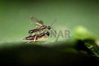 zwei Insekten auf einem Blatt