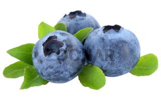 Blaubeere Blaubeeren Heidelbeere Heidelbeeren Beeren Beere Frucht Früchte Blätter Freisteller freigestellt isoliert