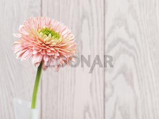 Pink Gerbera Daisy In Vase