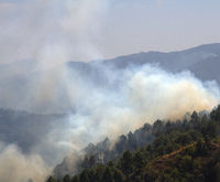 Forest fire on the dry slopes of the Himalayas