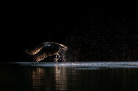 Osprey Takeoff XI