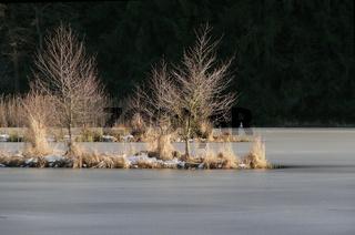 Zugefrorener Weiher mit Insel und Strauch und Baum, Mittelfranken, Bayern