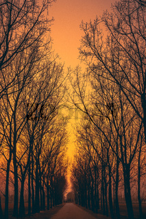 Trees Lane Sunset Afternoon Orange Skies Dark Forest Path Trail Road Perspective Looking Down Going