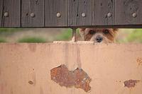 Hund hinter einem Zaun