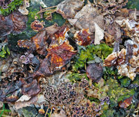 Fragment of natural forest ground cover with moss, cones, mushrooms