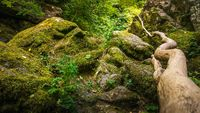 Stream or creek flowing between mossy rocks, water, autumn, Ireland