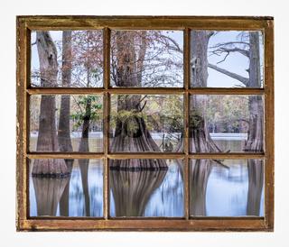 bald cypress trees on a lake shore