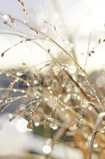 Herbstliche Gräser mit Wassertropfen