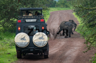 Two African elephant in front of jeep