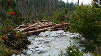 Umgestürzte Bäume in einem Fluss