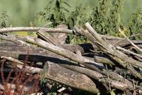 Kauz Holzstapel