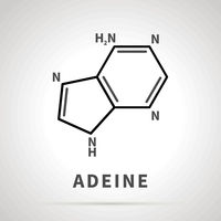 Chemical structure of Adeine, one of the four main nucleobases, simple black icon