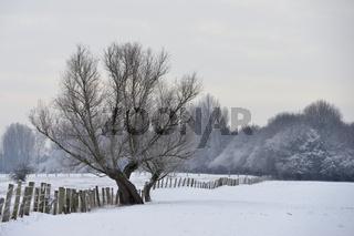 verschneite Wiesen... Bislicher Insel *Winter* , Niederrhein, Nordrhein-Westfalen