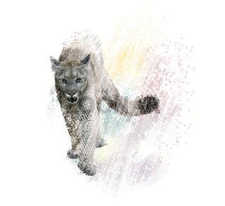 American cougar or puma digital painting