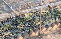 Small tree plantation in Madagascar