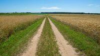 Sandy road through fields in Poland. Summer fields.