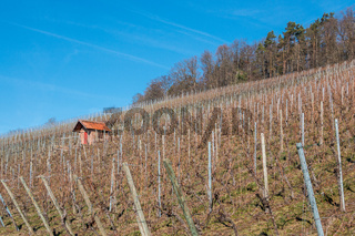 Little hovel in the middle of the wineyard