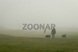 Dog walker with two dogs in a park in fog