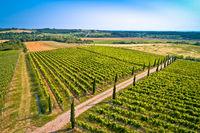 Istrian vineyard region aerial view. Town of Buje green landscape