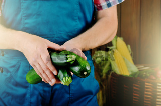 Farmer hold fresh organic zucchinis in his hands. Vegetable harvest concept