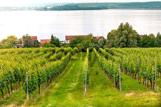 Apple tree plantation on Lake Constance, Germany