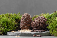 Cedar cones. Composition with moss and nuts on a gray concrete background.