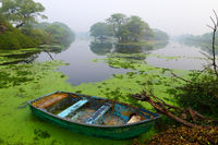 Canoe in lake with moss, Bharatpur, Rajasthan, India