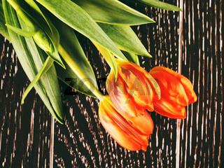 Orange Tulip Flowers