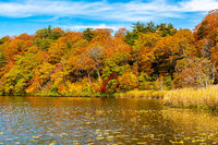 Beautiful autumn colorful leaf forest at Onuma Pond