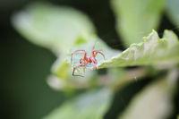 eine Spinne auf einem Blatt