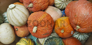 Abstract Several Gourds Background