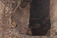 Junguhus im Malakowturm