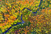 Aerial view of river and autumn forest