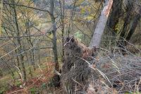 Auf dem Bärenstein im Erzgebirge