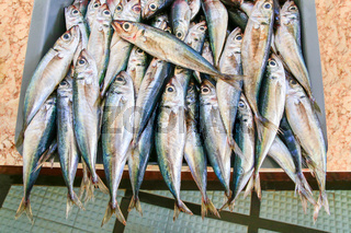 Many whole anchovies lying side by side in crate