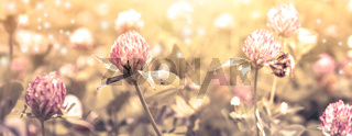 Beautiful spring wild meadow clover flowers, pink and yellow colors in sun light with bee, macro. Soft focus nature background. Delicate pastel toned image. Nature floral springtime. High key