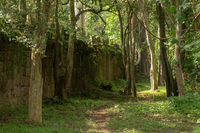 Footpath through trees along stone temple wall