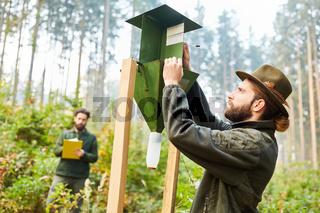 Förster kontrolliert Borkenkäferfalle im Wald