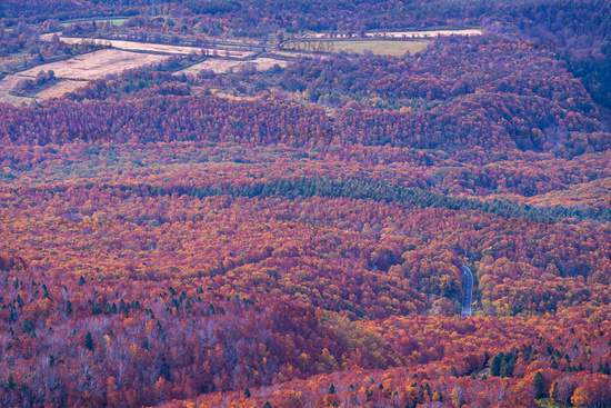 Aerial view Autumn Woodland forest Japan
