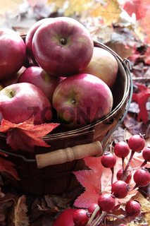 Red apples in basket and berries