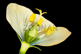 Flower model with stamens and pistils on black background