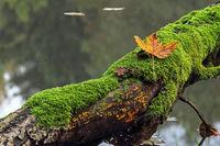 Alter Baumstamm im Wasser